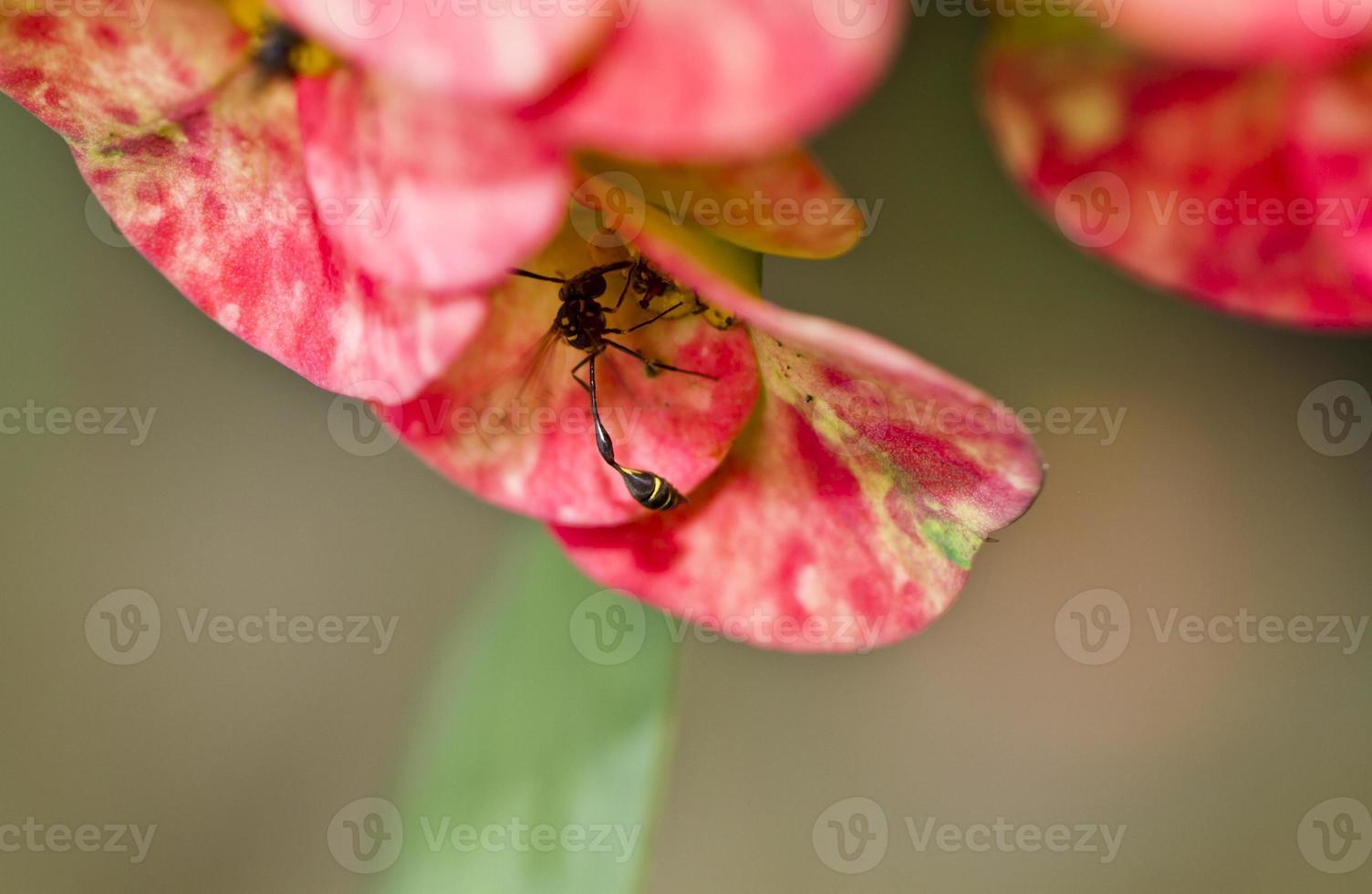 schwarze Wespe versteckt sich foto