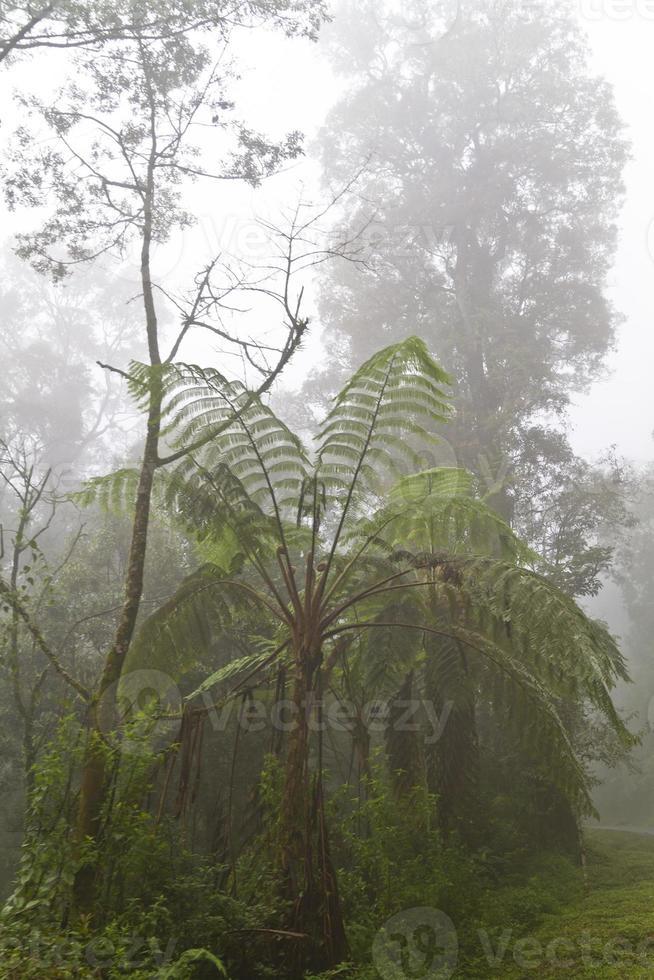 Farn im Nebel foto