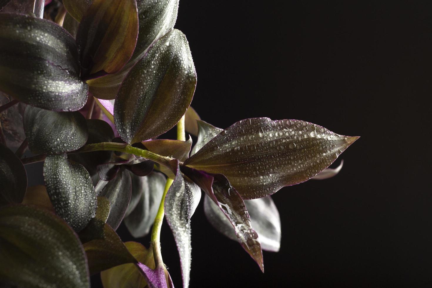 Details zu den Texturen der Zimmerpflanzen foto