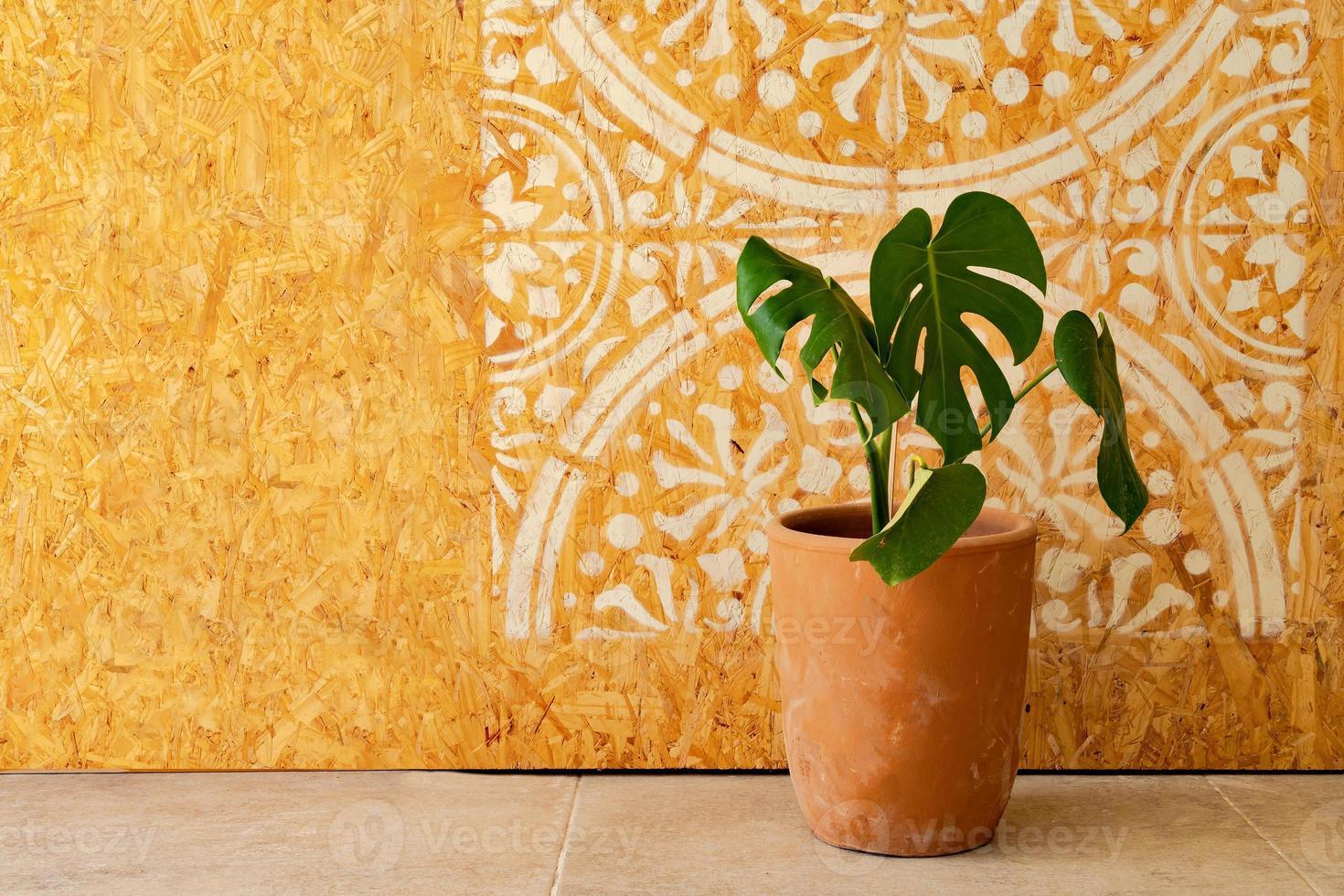 Zimmerpflanze in einem Topf mit Mandala-Bild an der Holzwand foto
