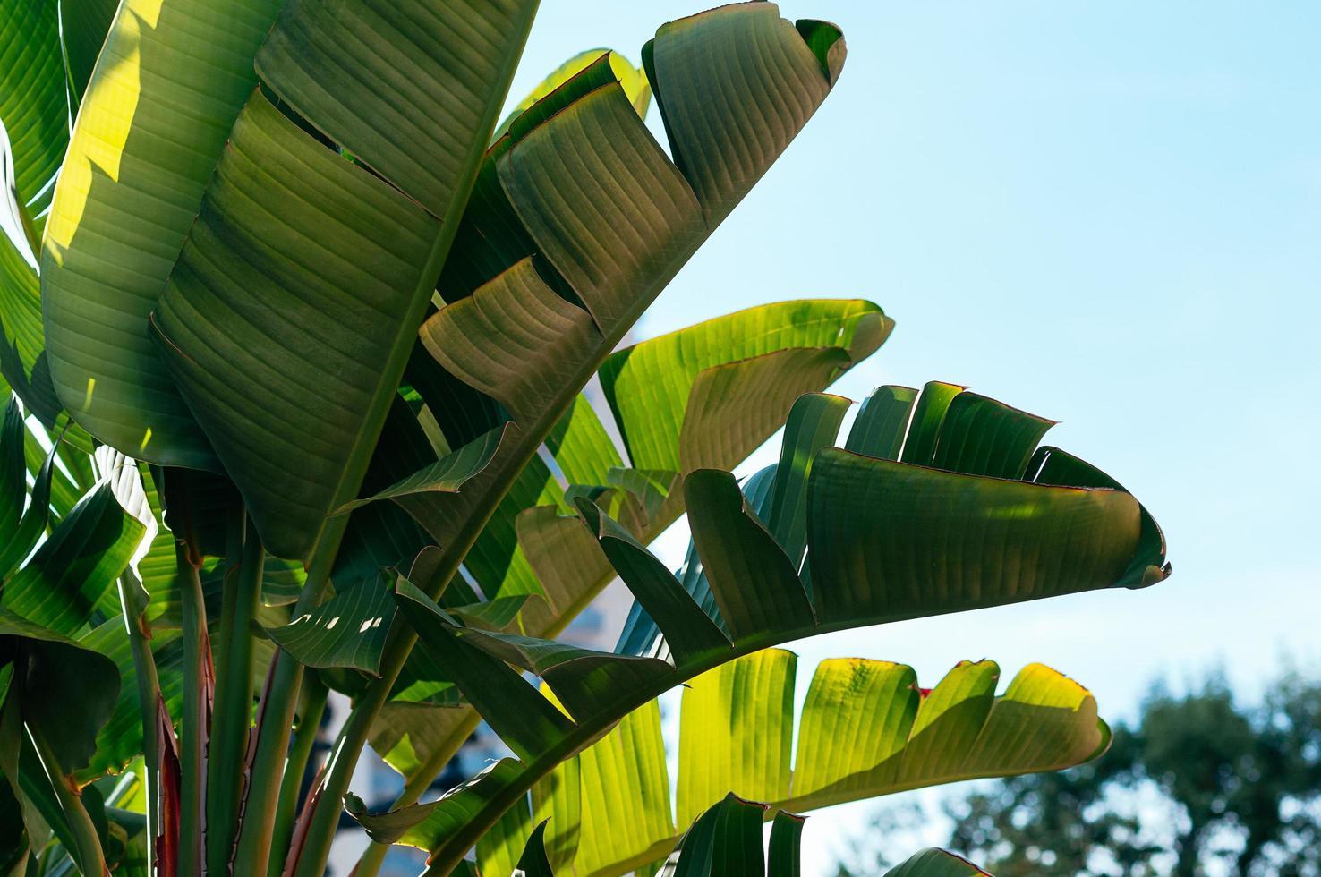 tropische Pflanzen gegen blauen Himmel foto