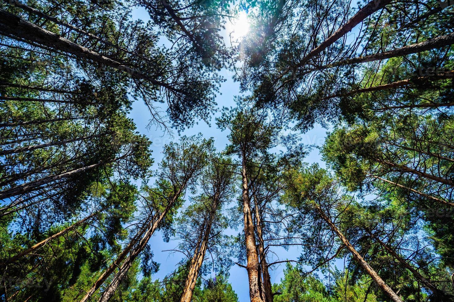 natürlicher Waldhintergrund foto
