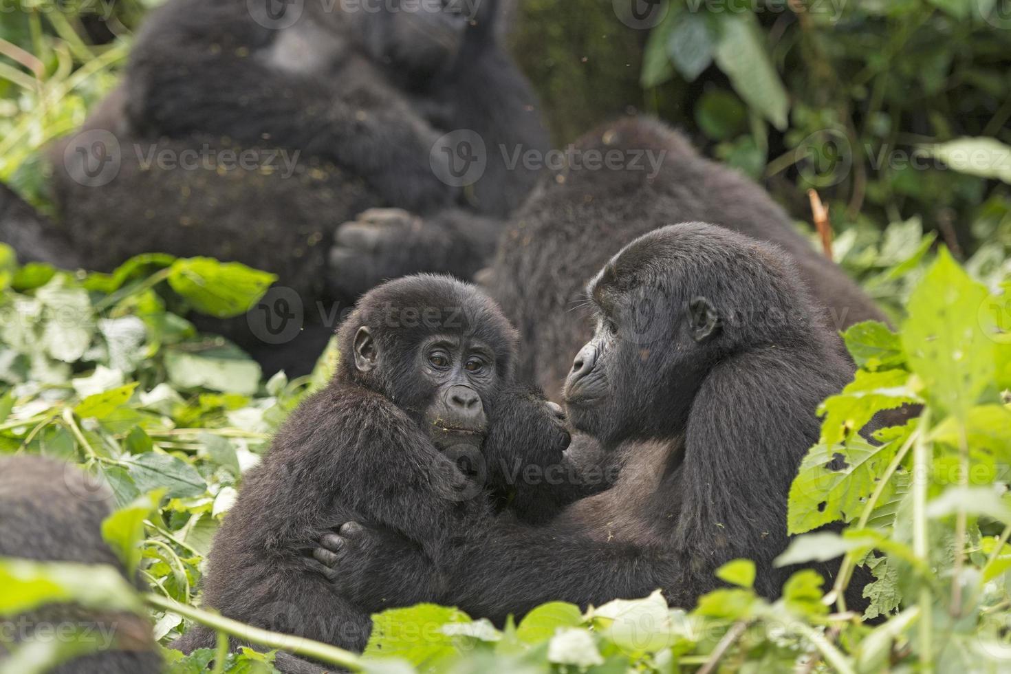 Mutter und Kind Gorilla im Wald foto