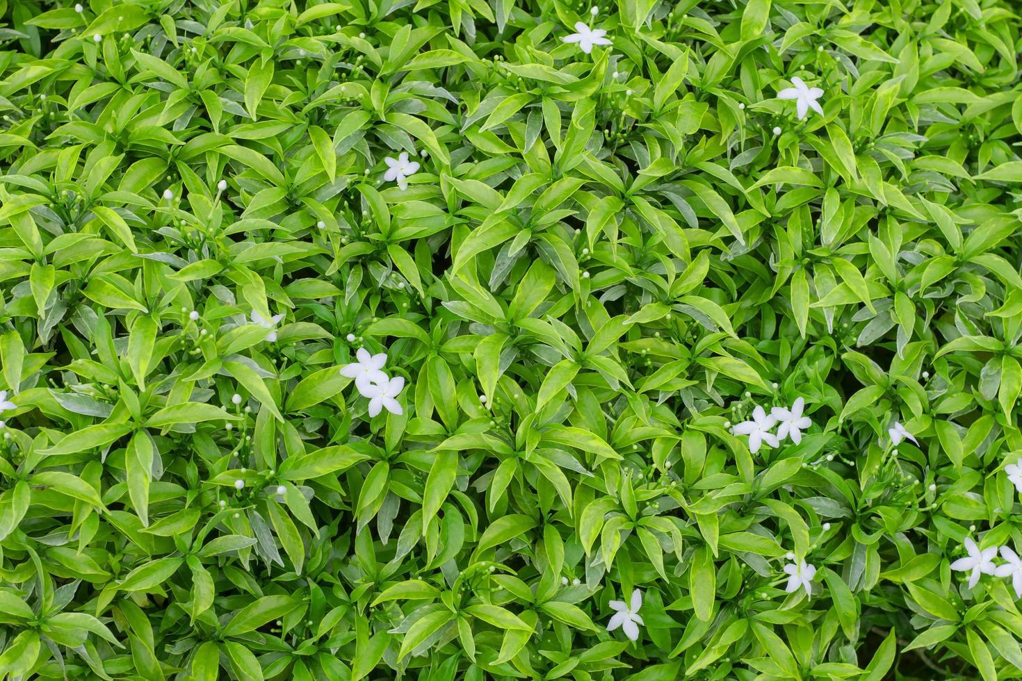 grünes Blatt Hintergrundtextur foto