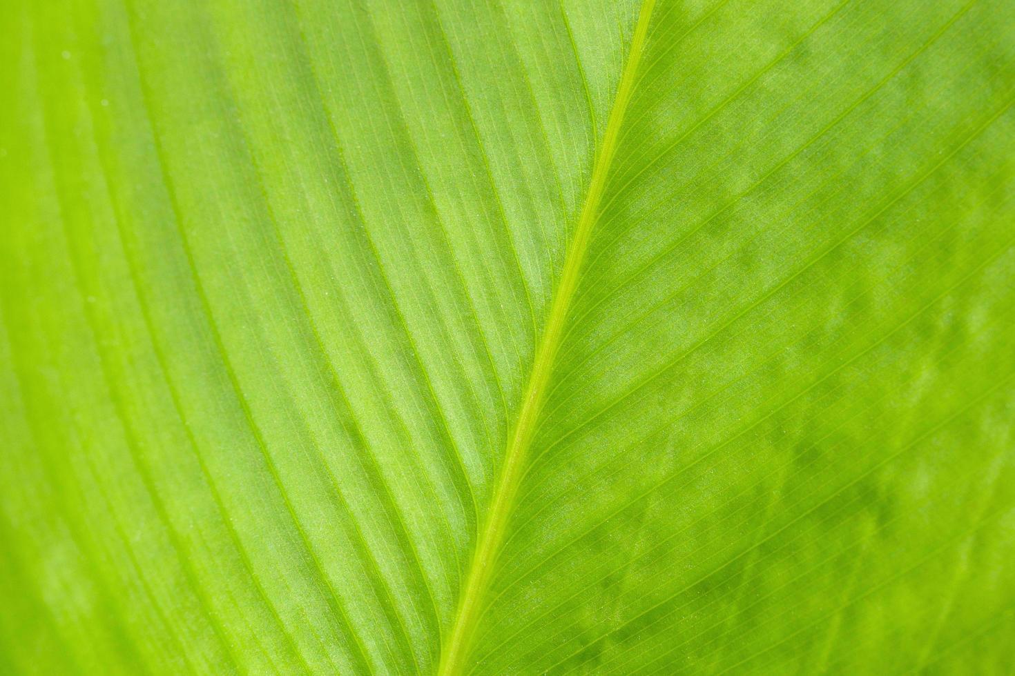 grünes Blattmuster, abstrakter Naturhintergrund. Nahaufnahme. foto