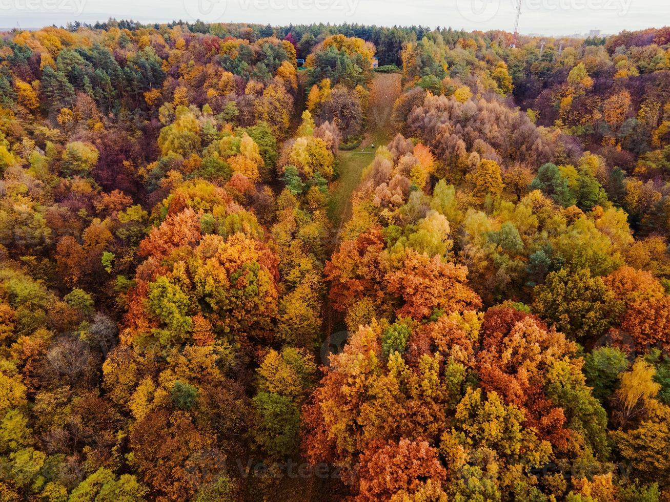 Luftaufnahme des Herbstwaldes foto