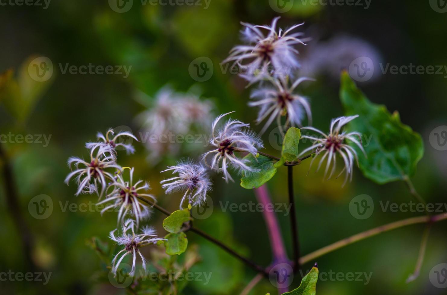 Nahaufnahme von Wildpflanze foto