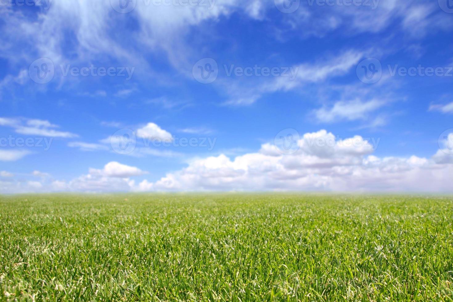 schönes Feld mit grünem Gras und blauem bewölktem Himmel foto
