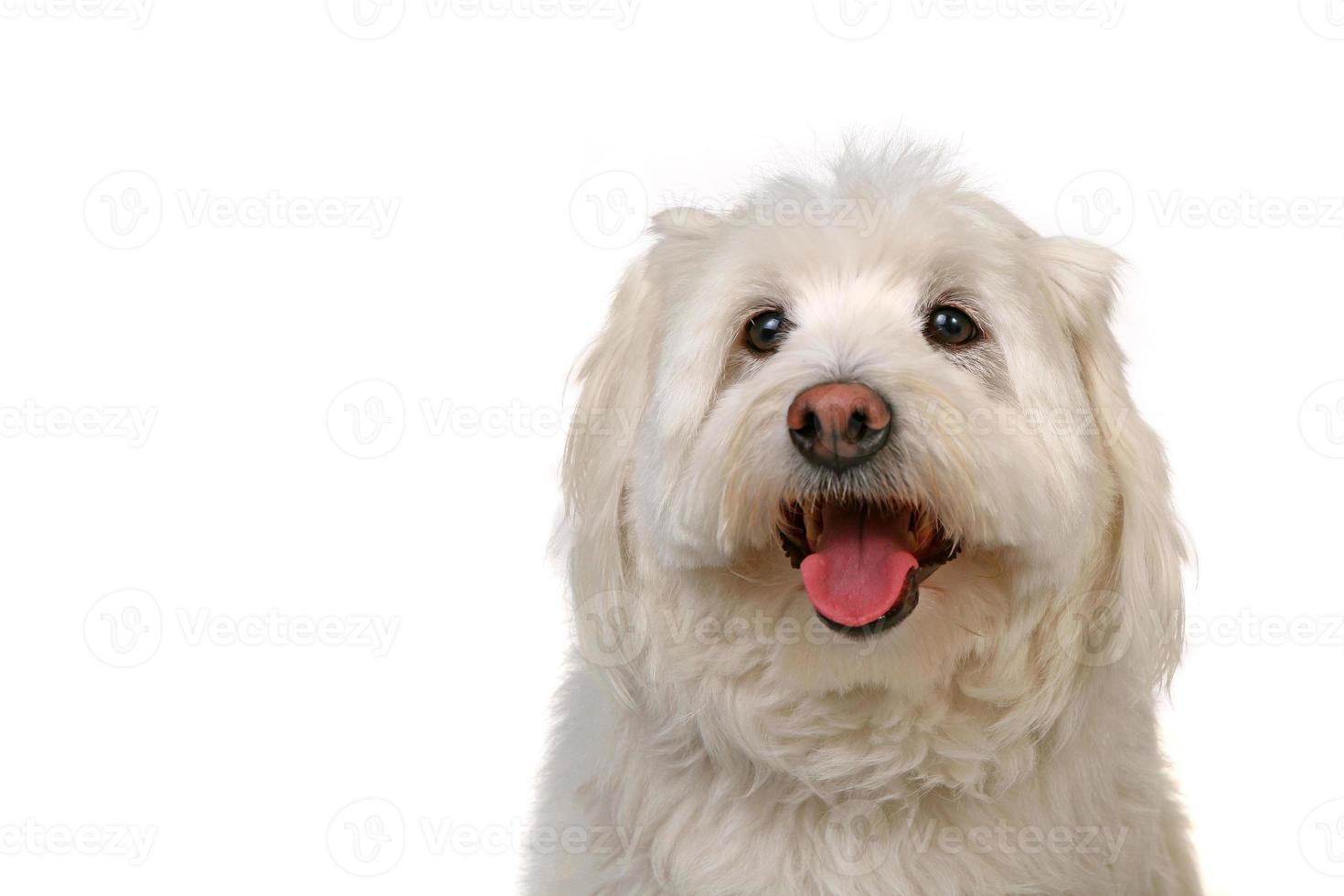 glücklicher gesunder Hund foto