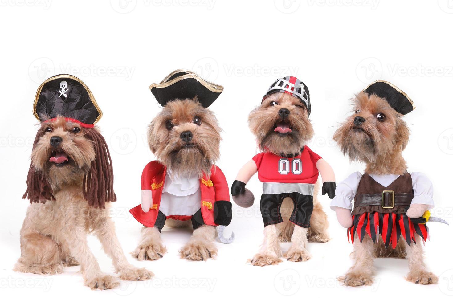 lustige mehrere Hunde in Piraten- und Fußballkostümen foto