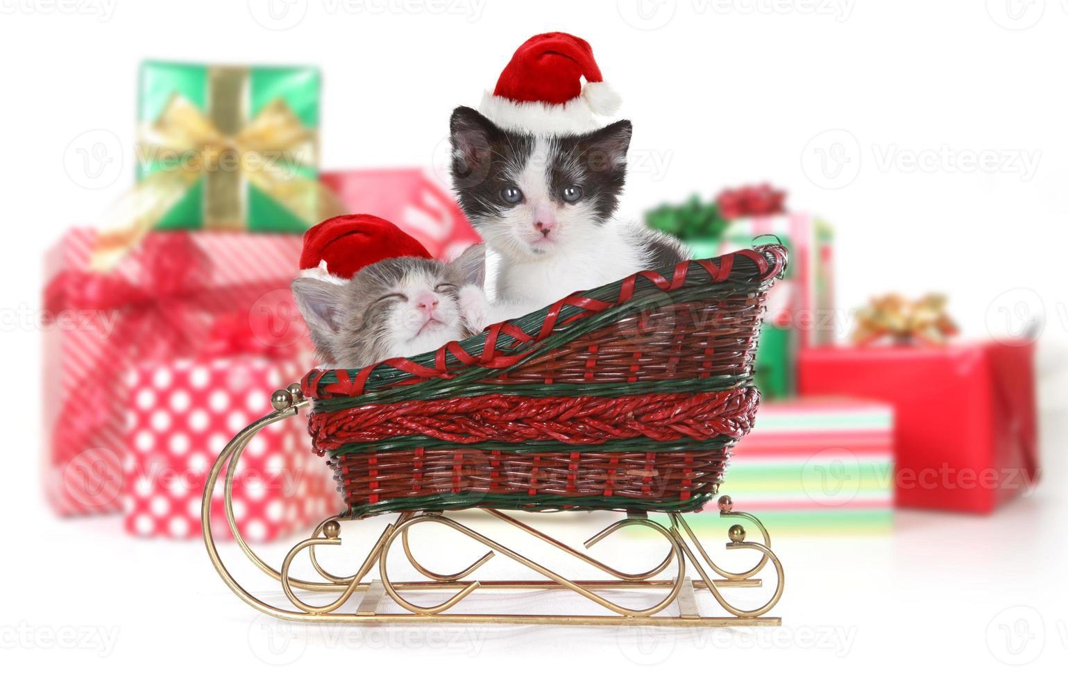 entzückende Kätzchen umgeben von Weihnachtsgeschenken im Schlitten foto