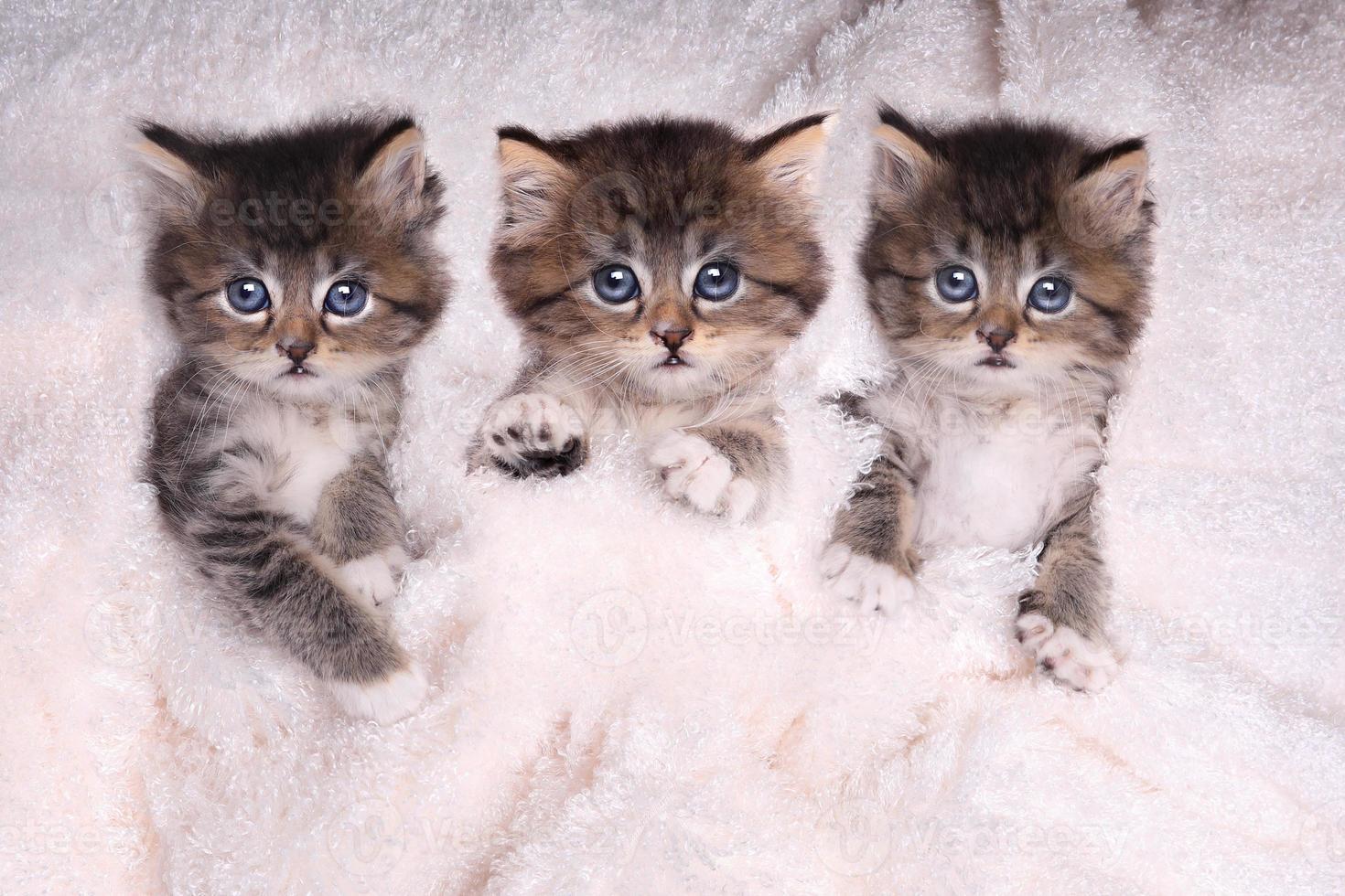Kätzchen liegen im Bett mit Decke foto