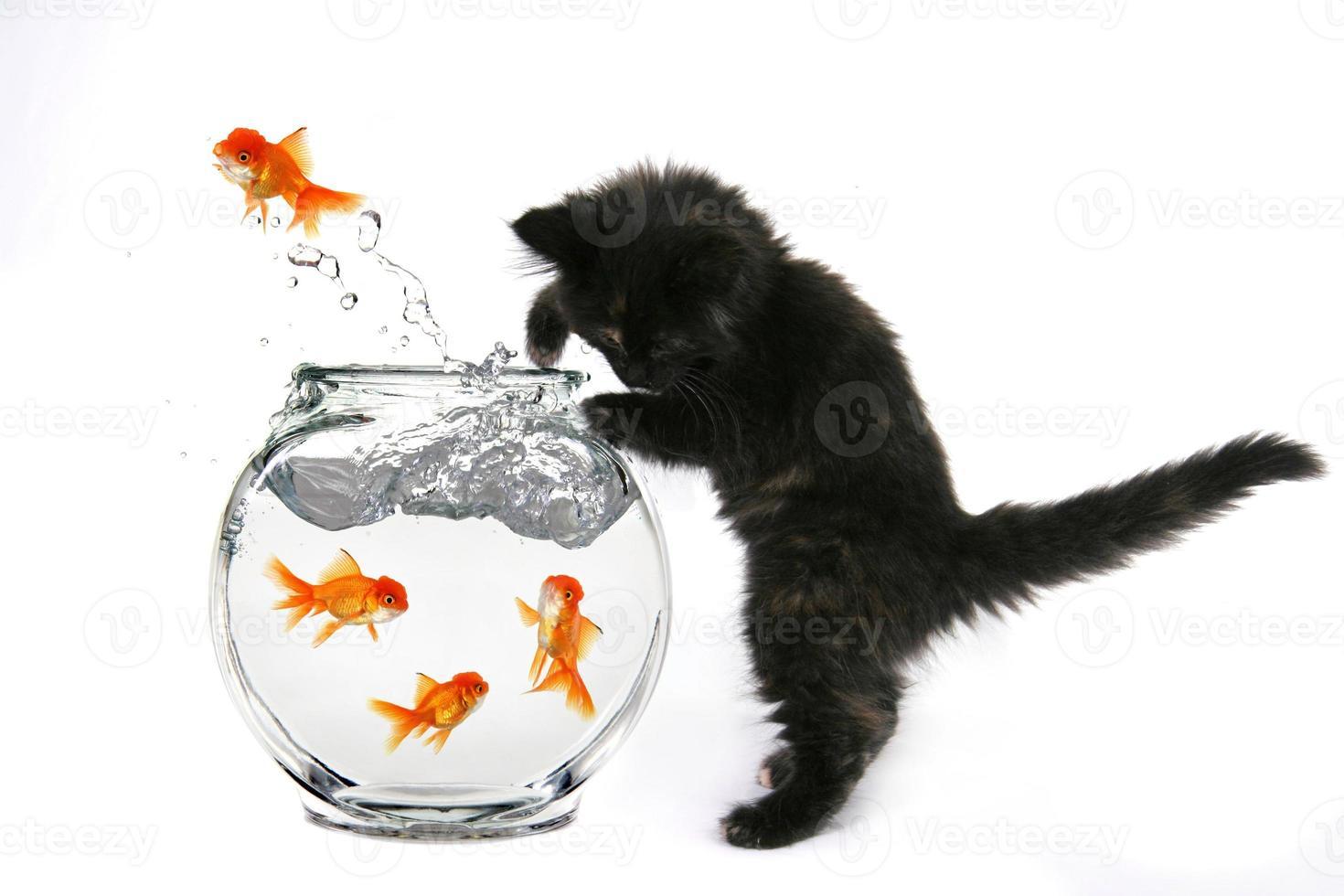 Kätzchen, das Goldfische fängt, die aus einem Goldfischglas springen foto
