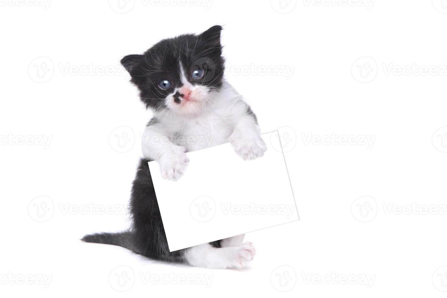 süßes Kätzchen im Smoking-Stil auf weißem Hintergrund foto