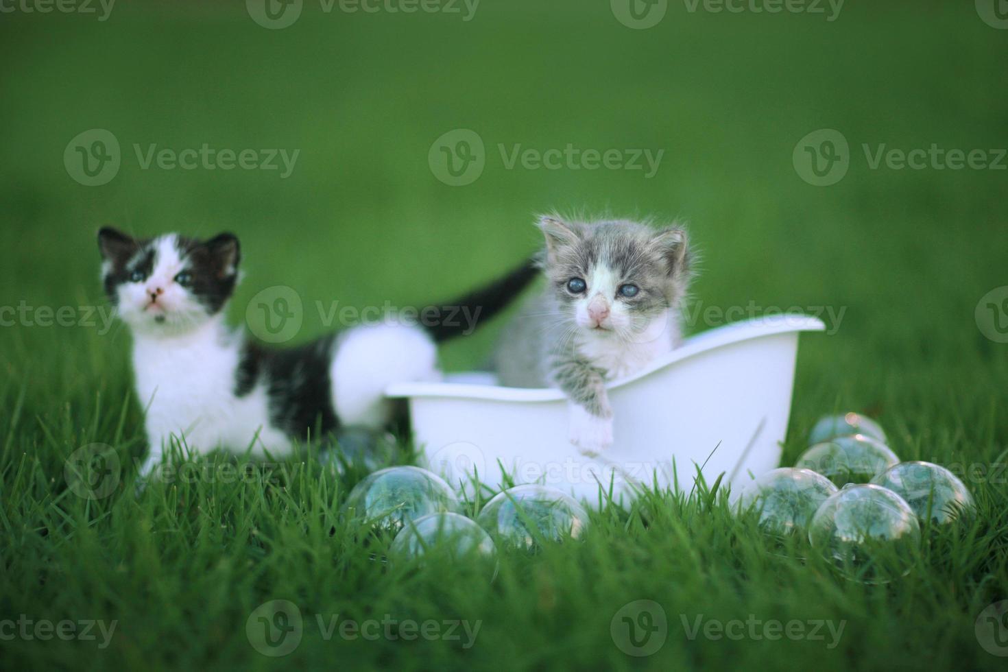 Kätzchen im Freien auf einer grünen Graswiese foto