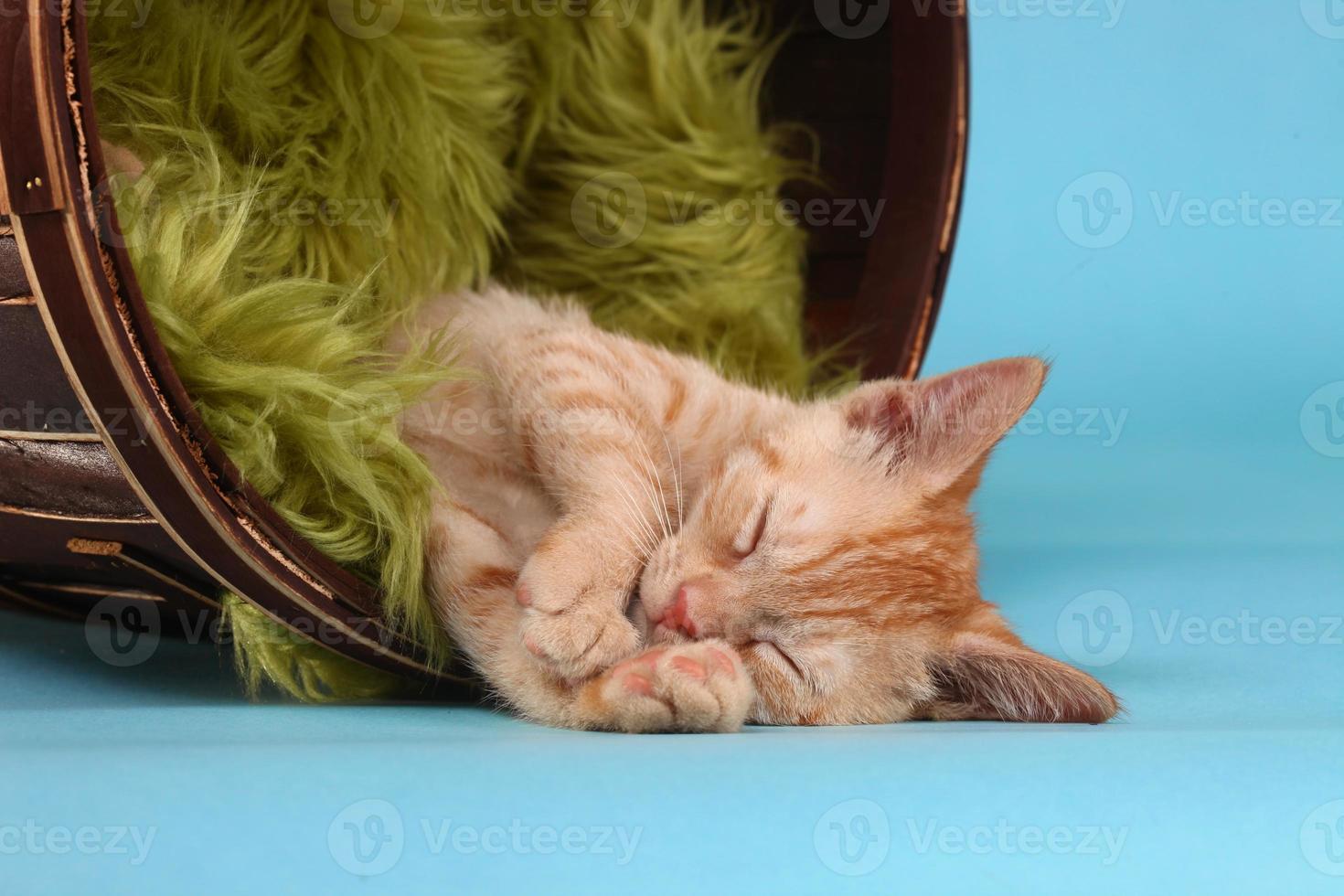 kleines orange getigertes Kätzchen im Studio foto