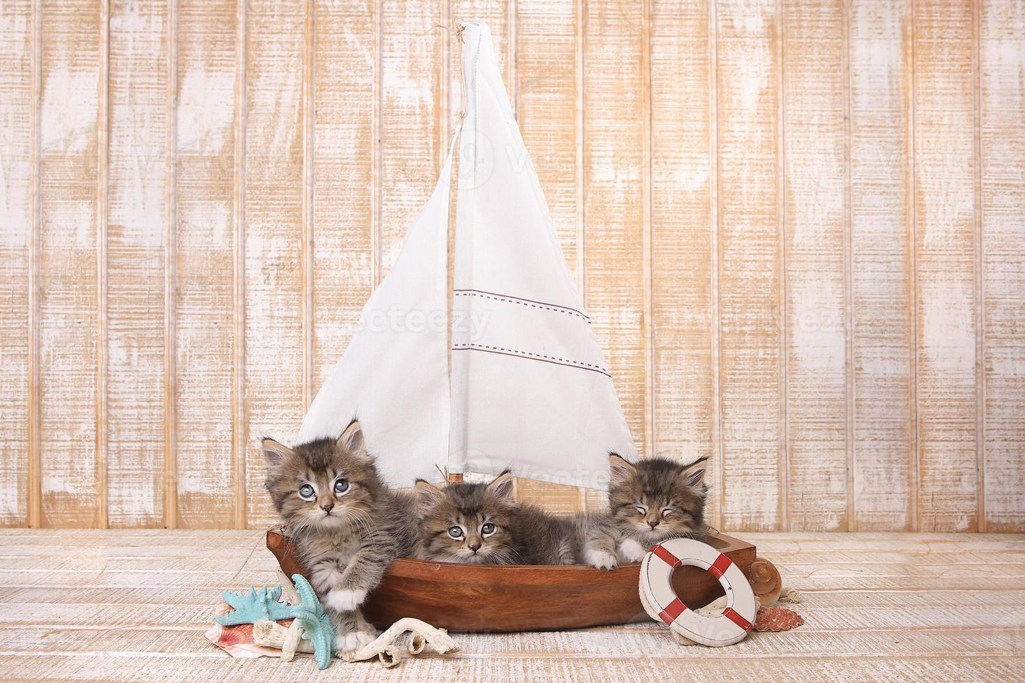 süße Kätzchen in einem Segelboot mit Ozeanmotiv foto