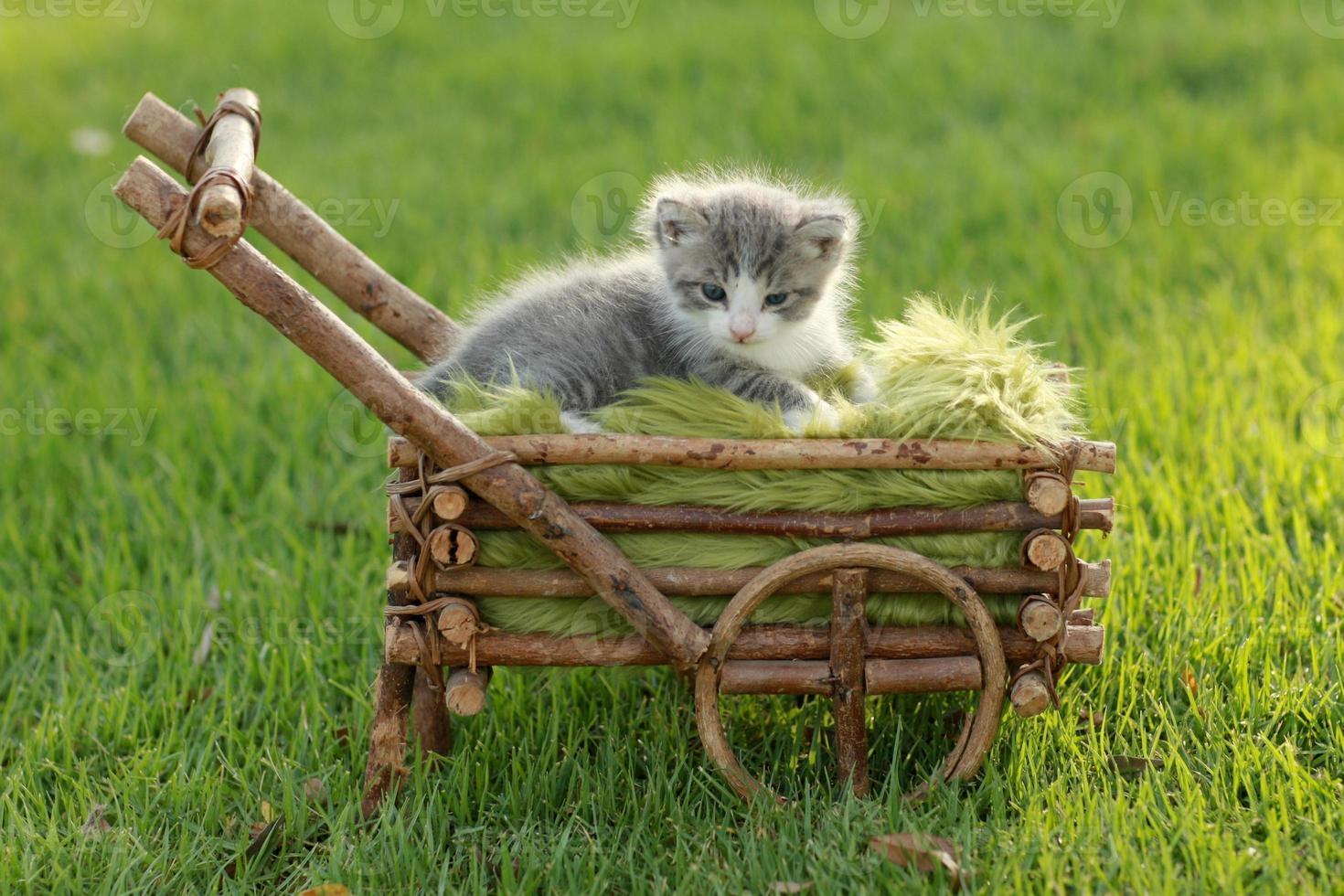 Babykätzchen draußen im Gras foto