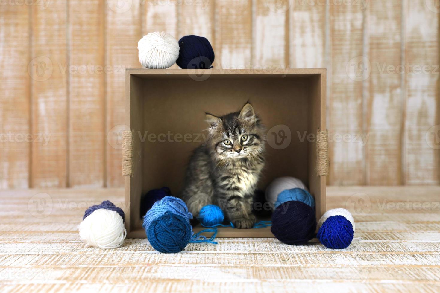Kätzchen in einer Schachtel mit blau-weißem Garn foto