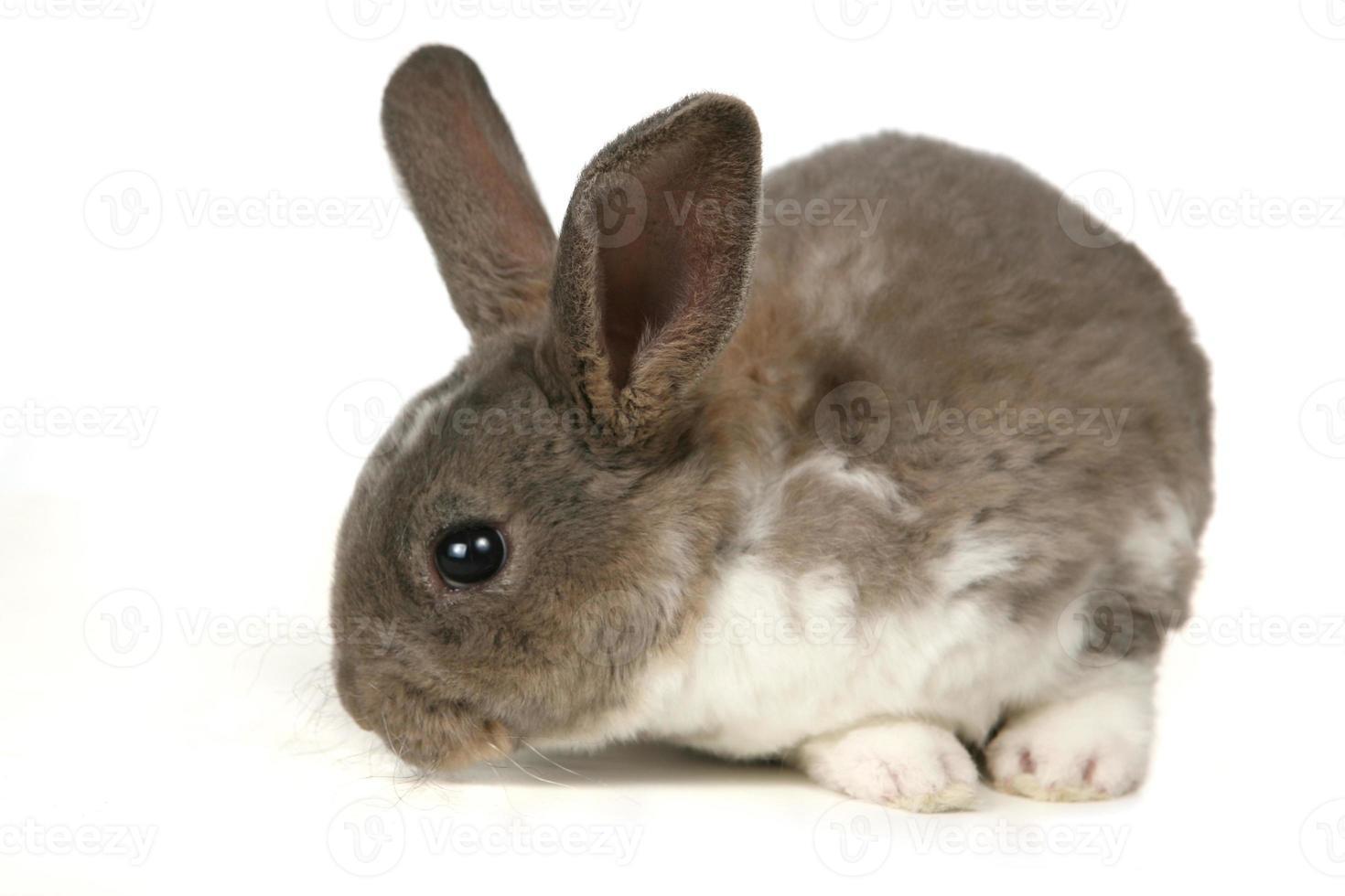 entzückender Hase auf weißem Hintergrund foto