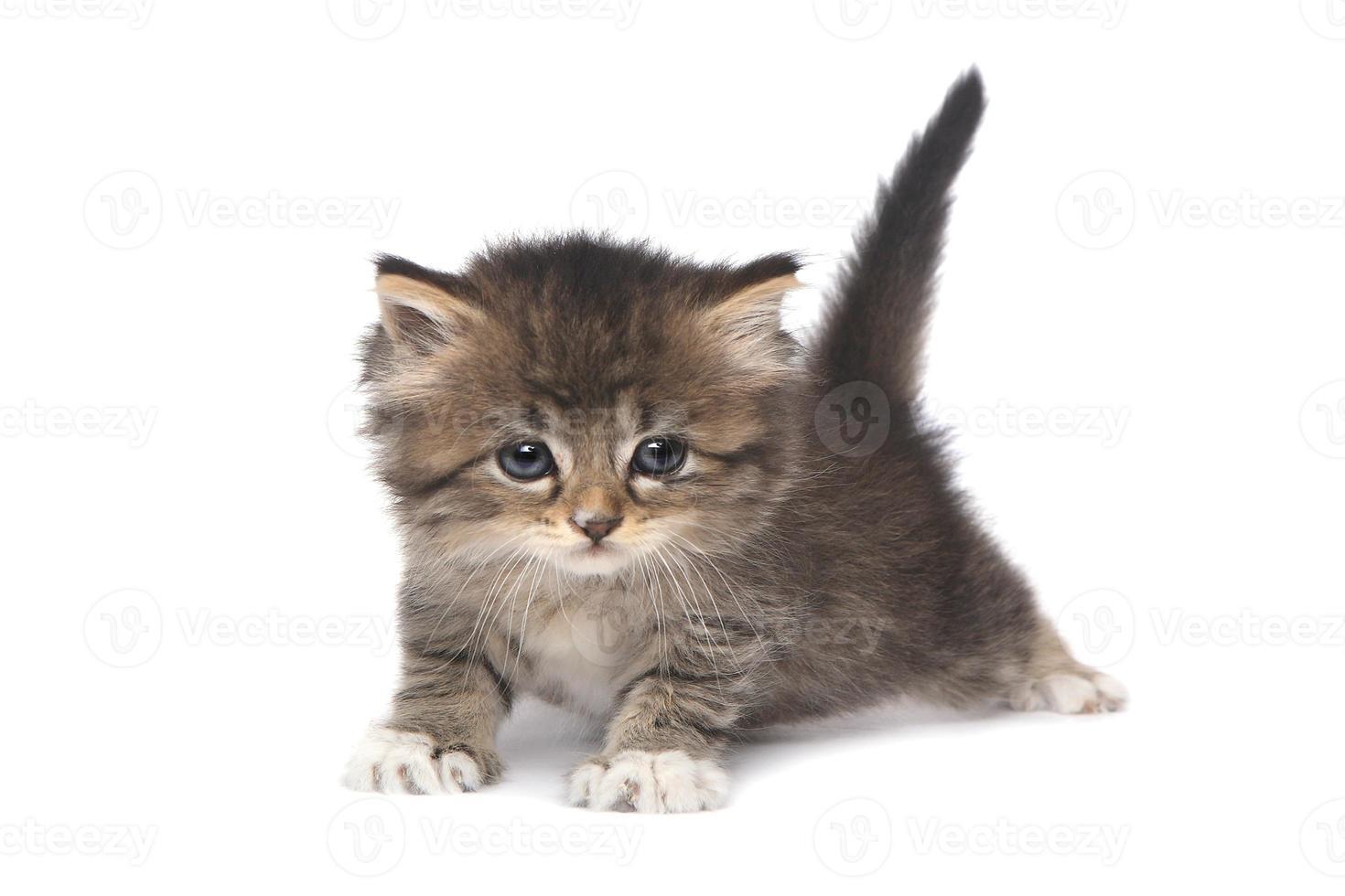kleines 4 Wochen altes Kätzchen auf weißem Hintergrund foto