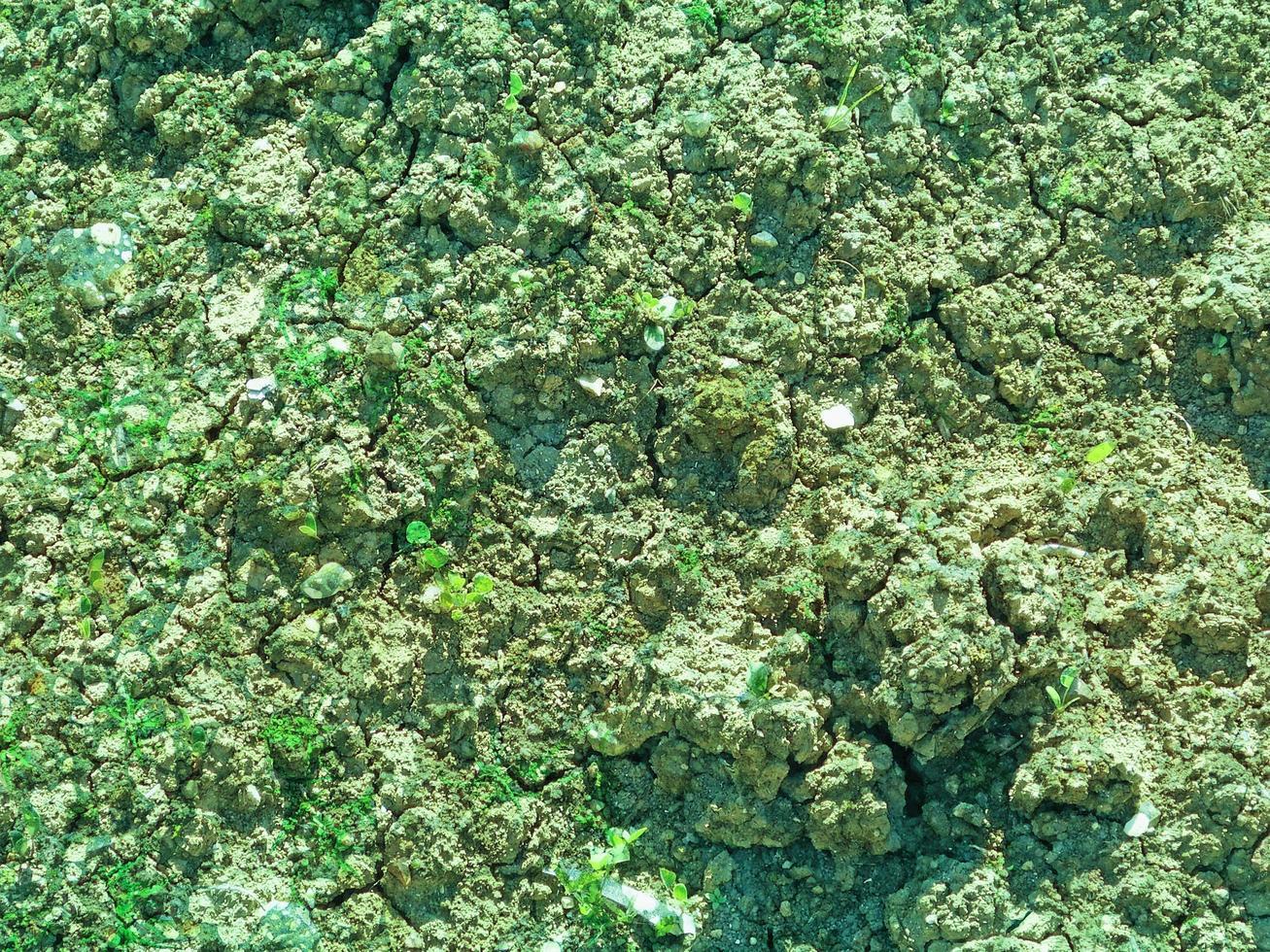 grünes Wasser Bodentextur foto