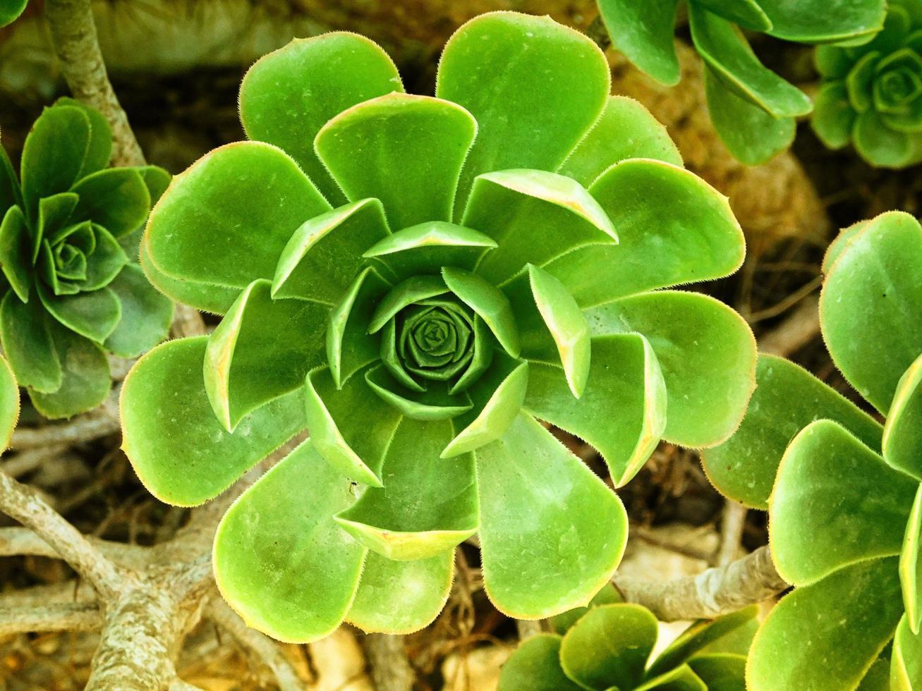 Pflanzen im Garten foto