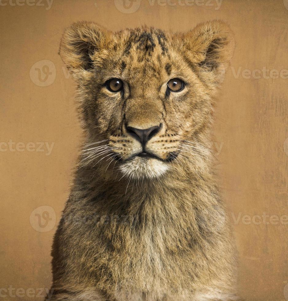 Nahaufnahme eines Löwenjungen, Weinlesehintergrund foto