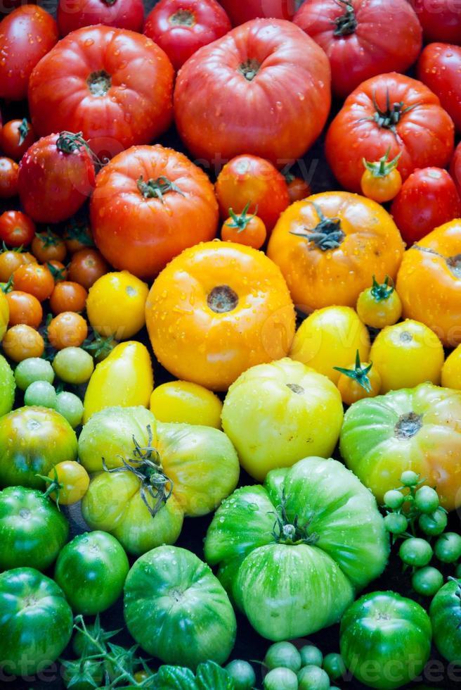 frische Bio-Tomaten foto