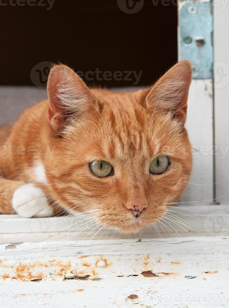 Porträtfoto einer Katze, die von einem Fenster schaut foto