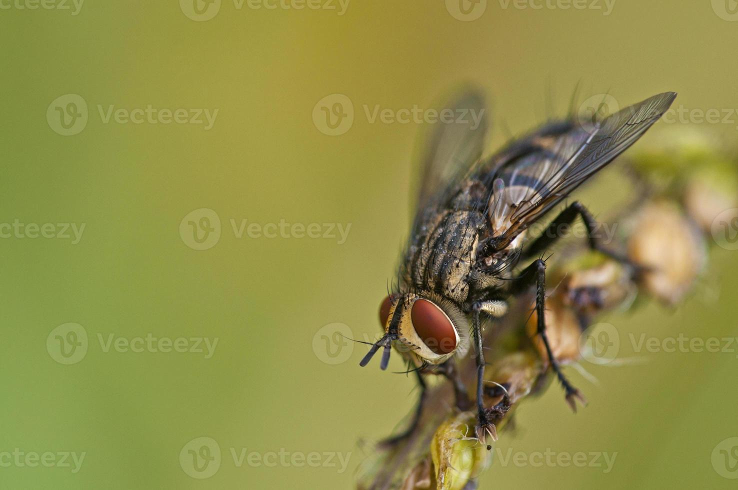 Fliegenporträt foto