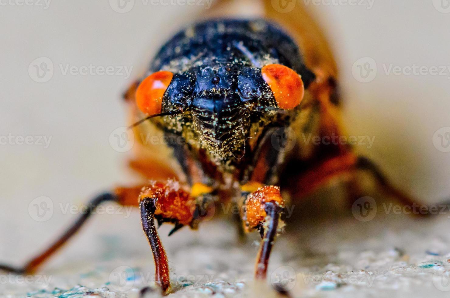 Nahaufnahme der Zikade foto
