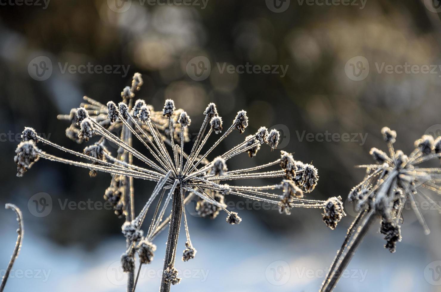gefrorenes Gras foto
