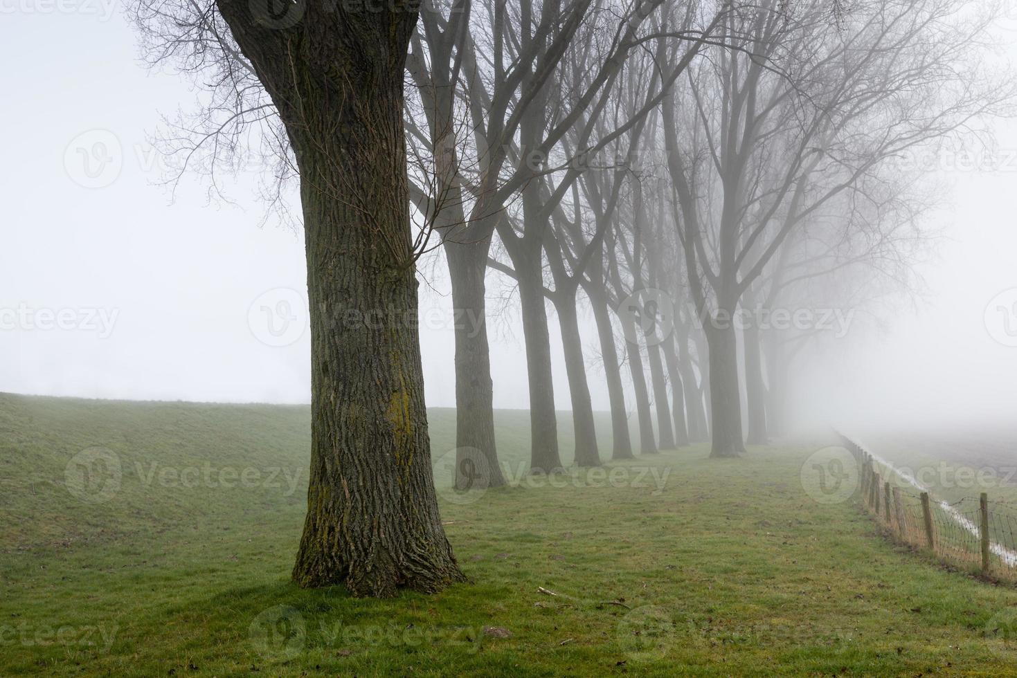 Reihe blattloser Bäume neben einem Deich foto
