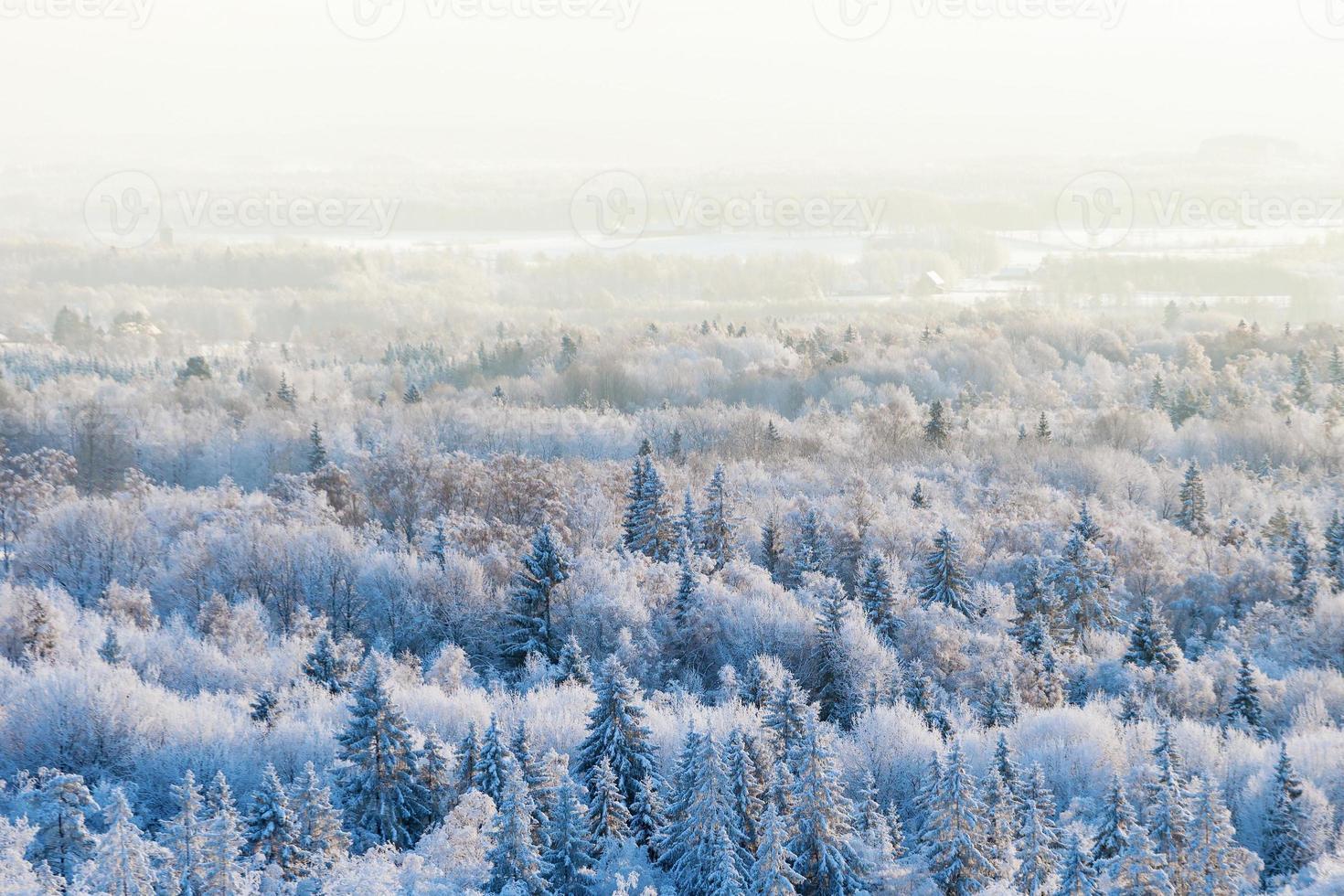 Blick auf den Winterwald foto