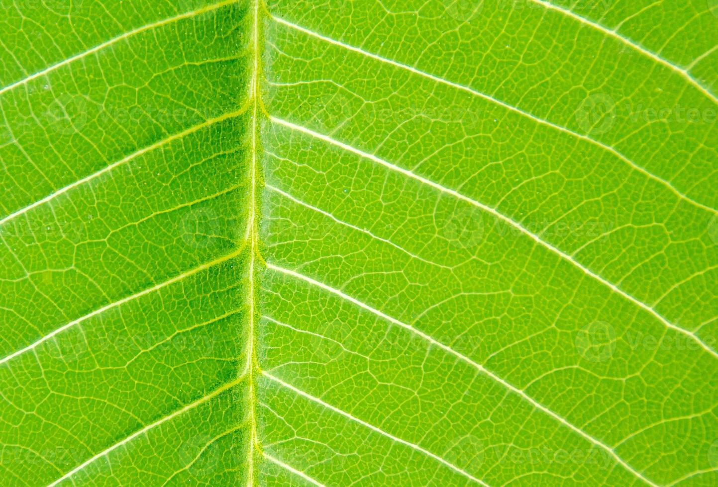 das grüne Blatt auf der Natur foto