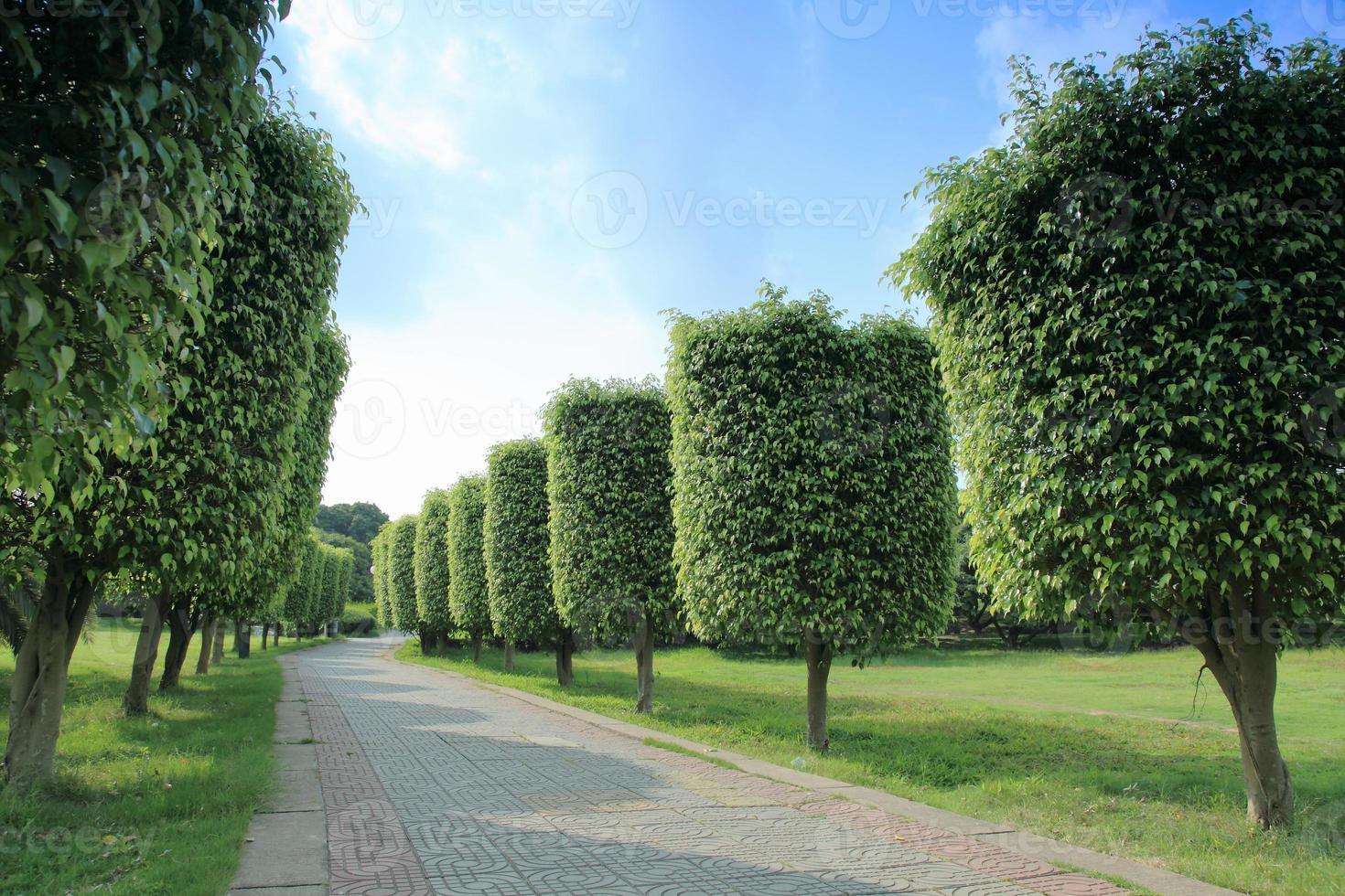 Arrangement Bäume foto
