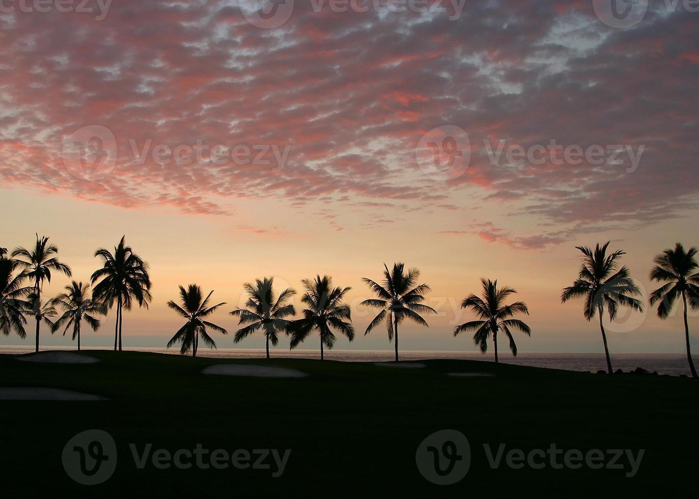 Silhouette der Palmen auf dem Golfplatz bei Sonnenuntergang foto