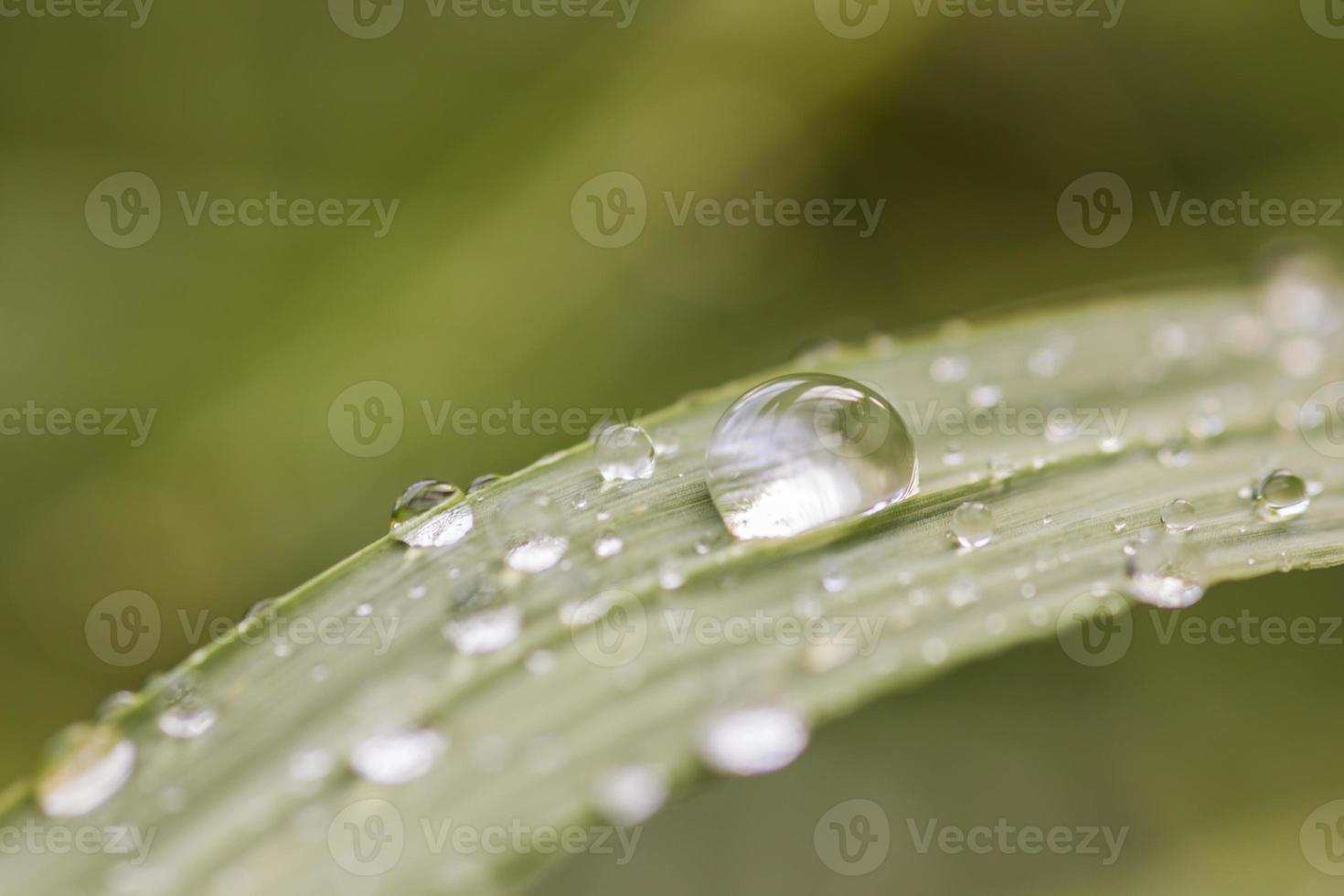 ein Bild von Gras mit Regentropfen foto