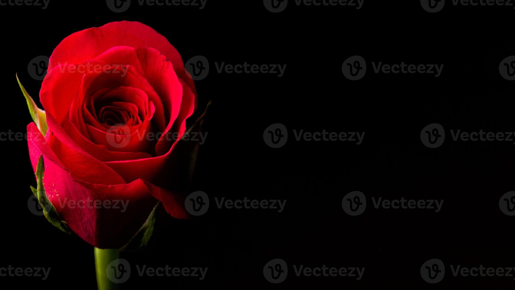 rote Rose symbolisch für Liebe und Mitgefühl foto