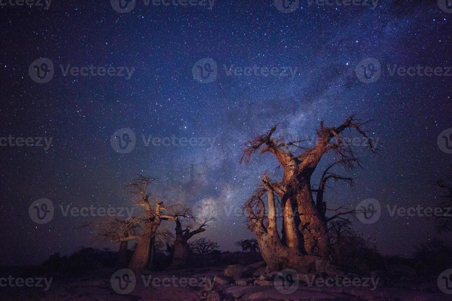 Affenbrotbäume unter der Milchstraße foto