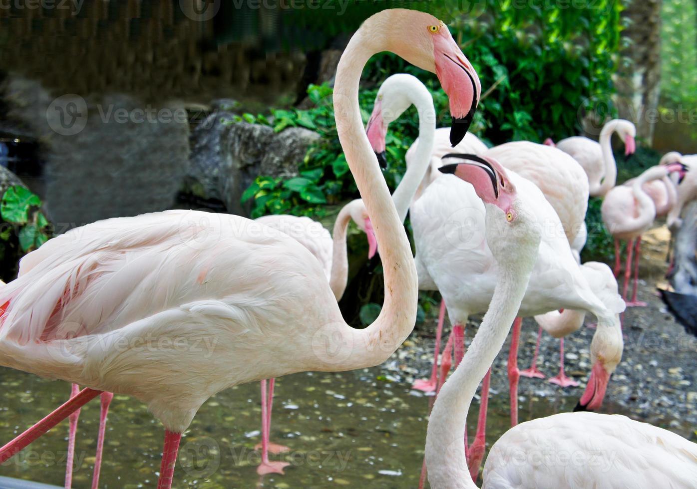 schönes Nahaufnahmeporträt des weißen Flamingos foto