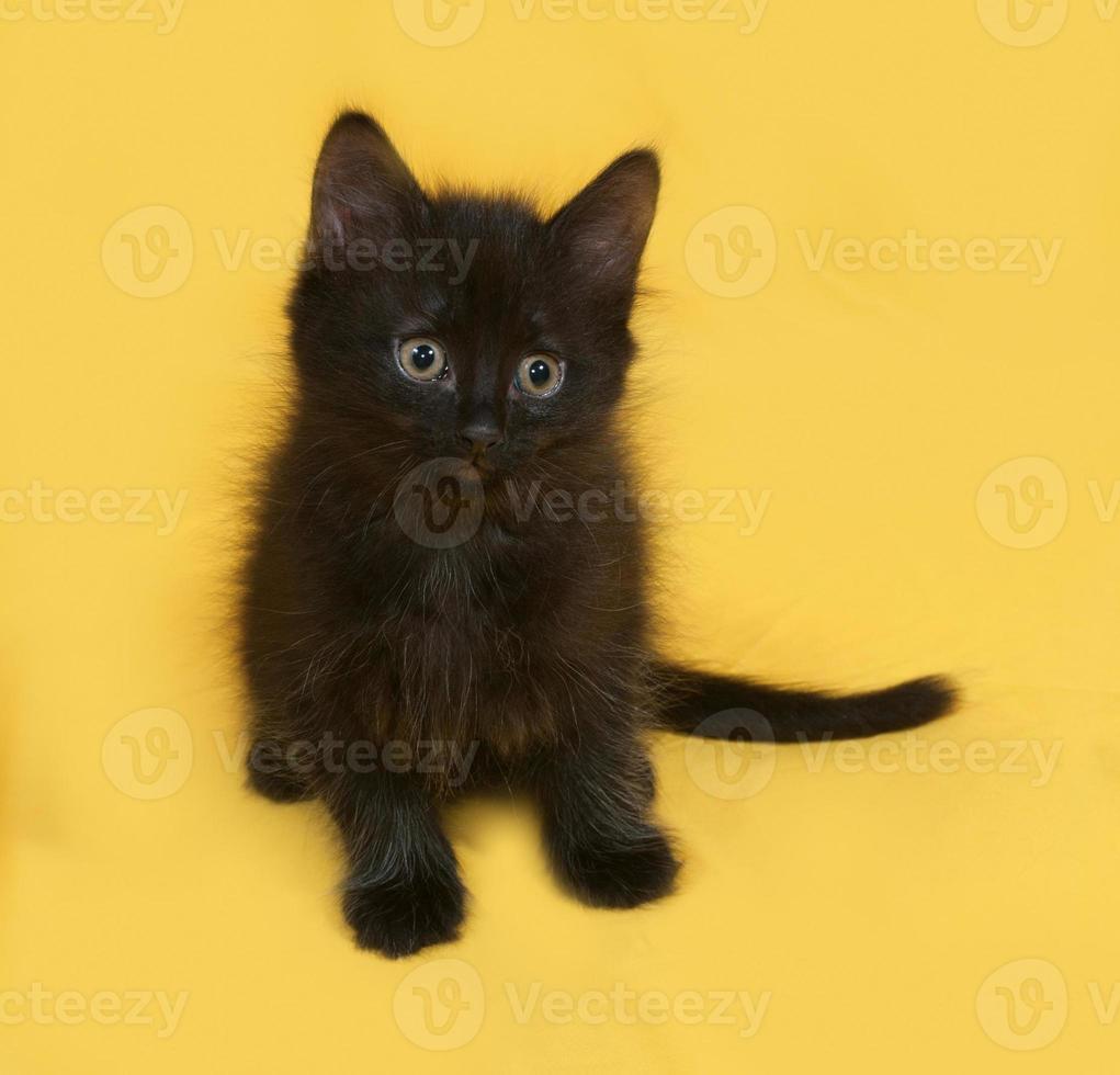 kleines flauschiges schwarzes Kätzchen, das auf Gelb sitzt foto