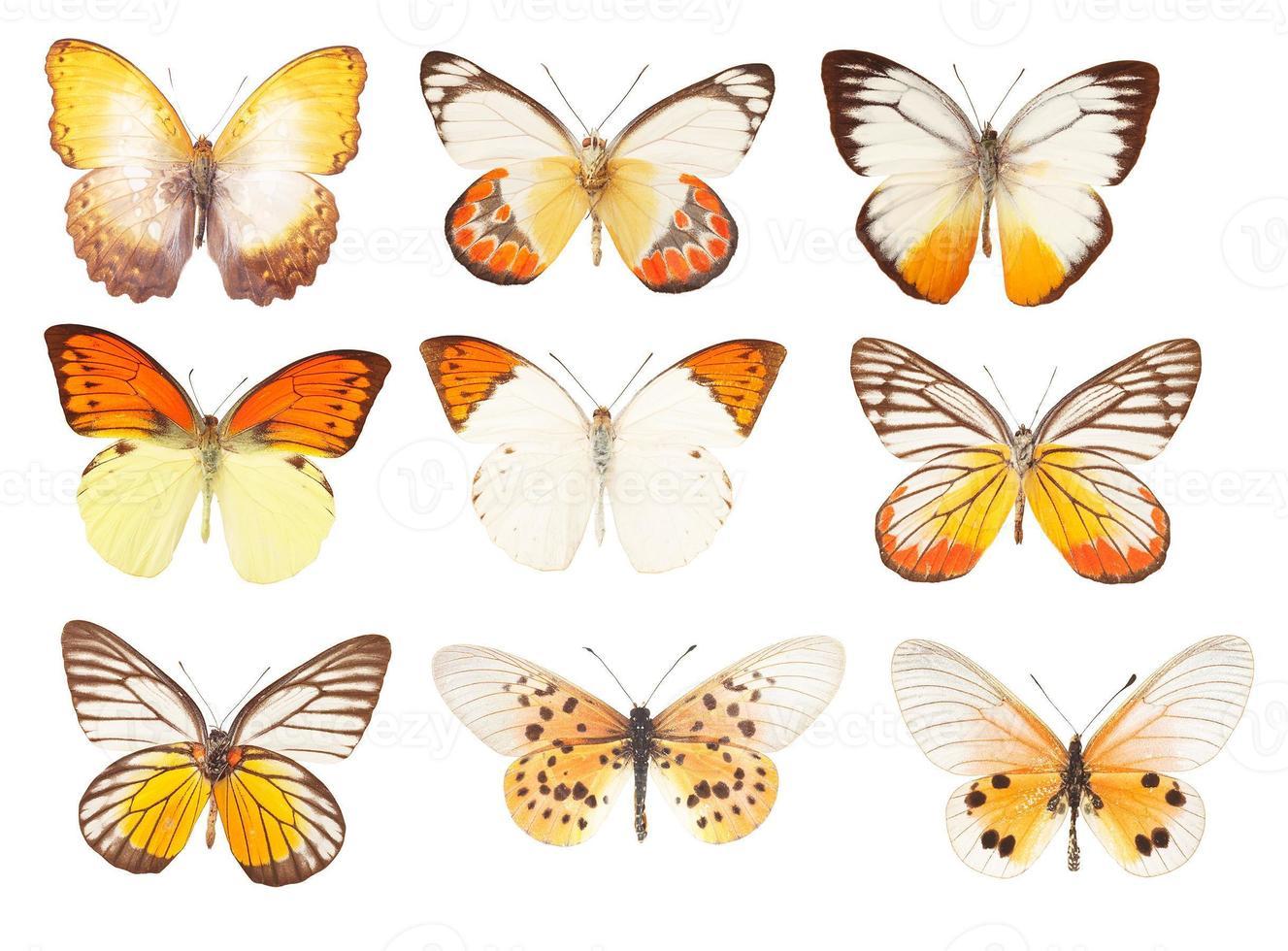 gelber Schmetterling auf weißem Hintergrund foto