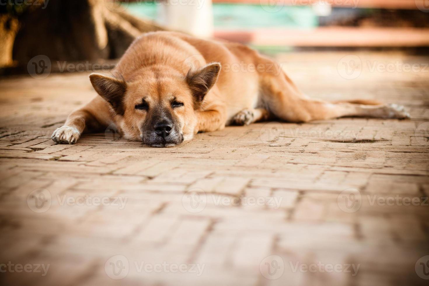 schlafender obdachloser einsamer Straßenhund auf dem Fußweg foto