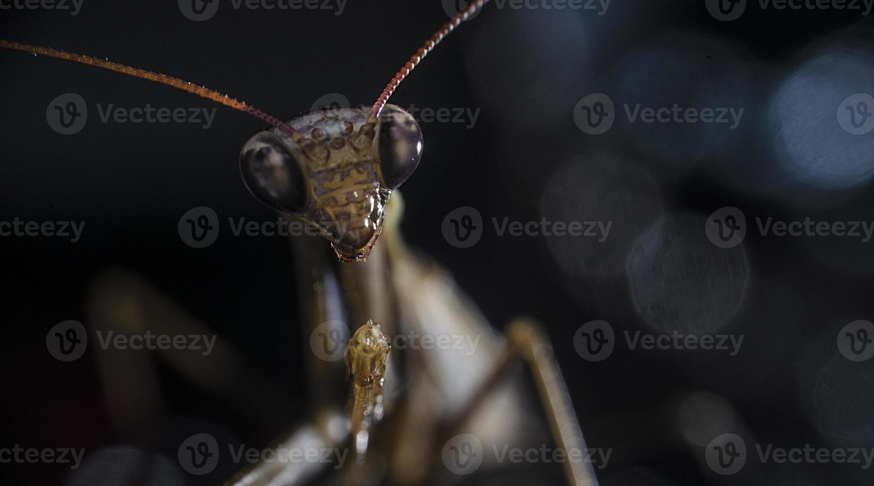 Insekt auf schwarzem Hintergrund foto