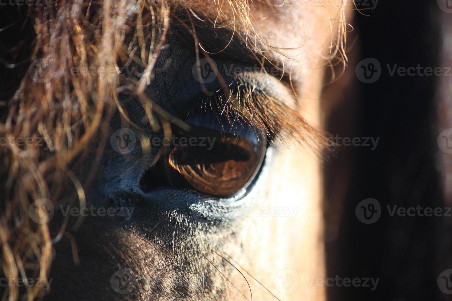 braunes Pferdeauge und Mähne schließen foto
