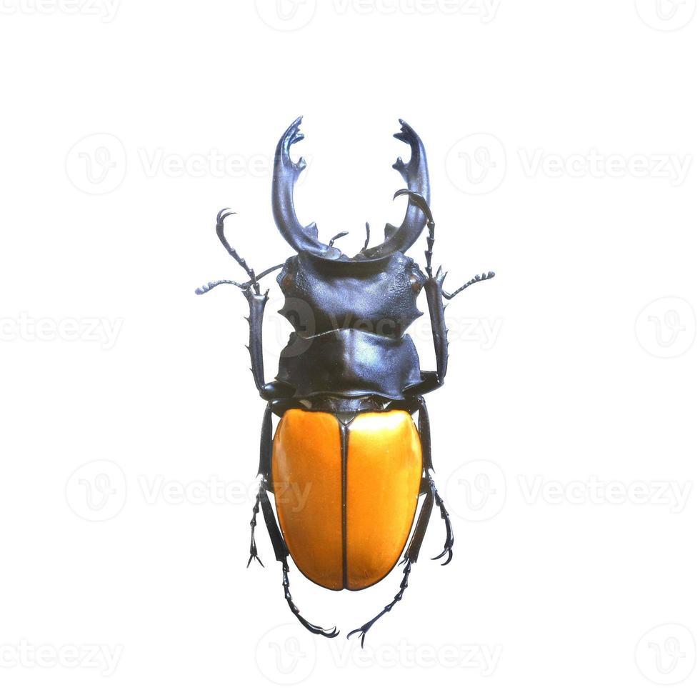 Käfer lokalisiert auf weißem Hintergrund foto