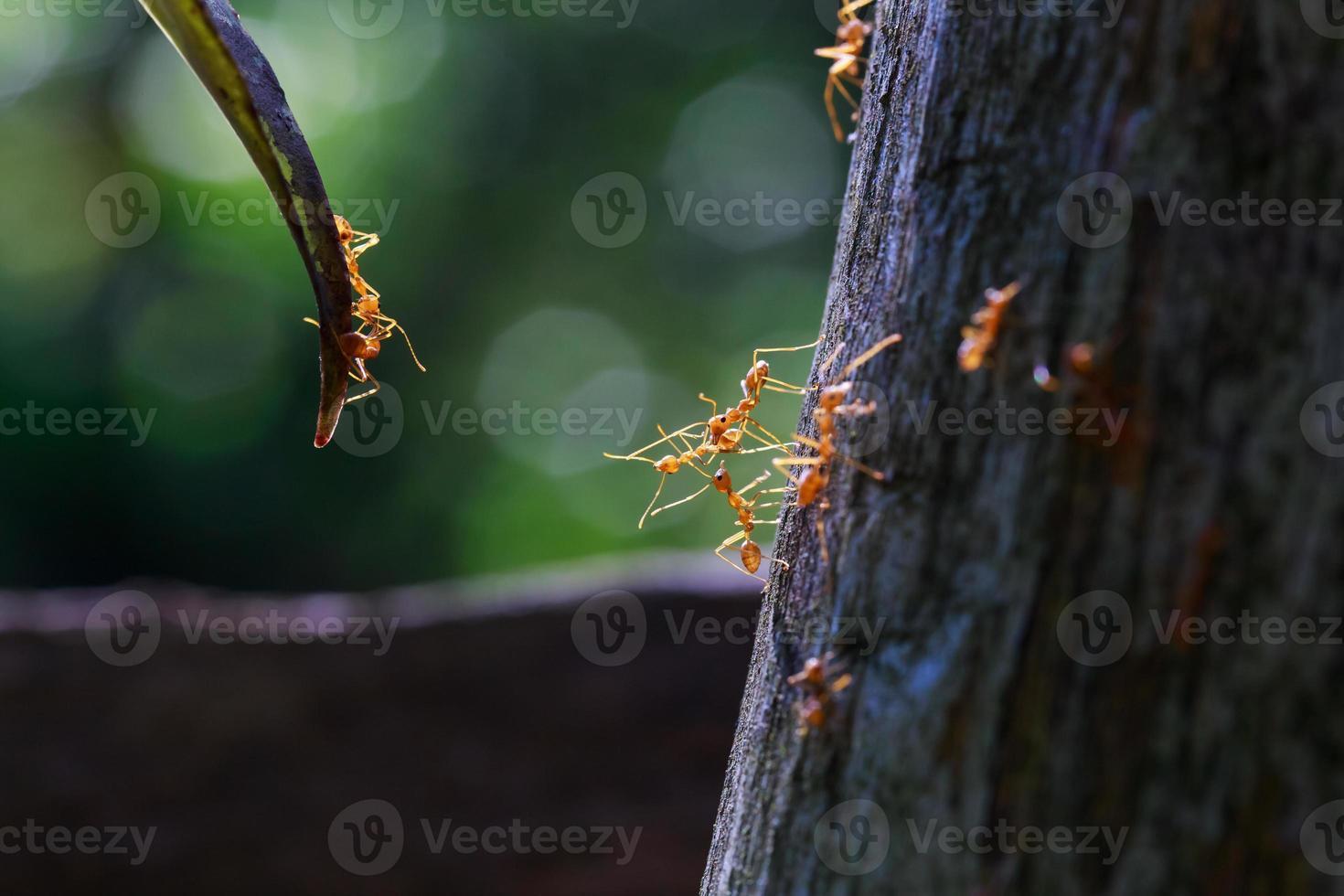 Nahaufnahme der Ameiseneinheit, die sich gegenseitig erreicht foto