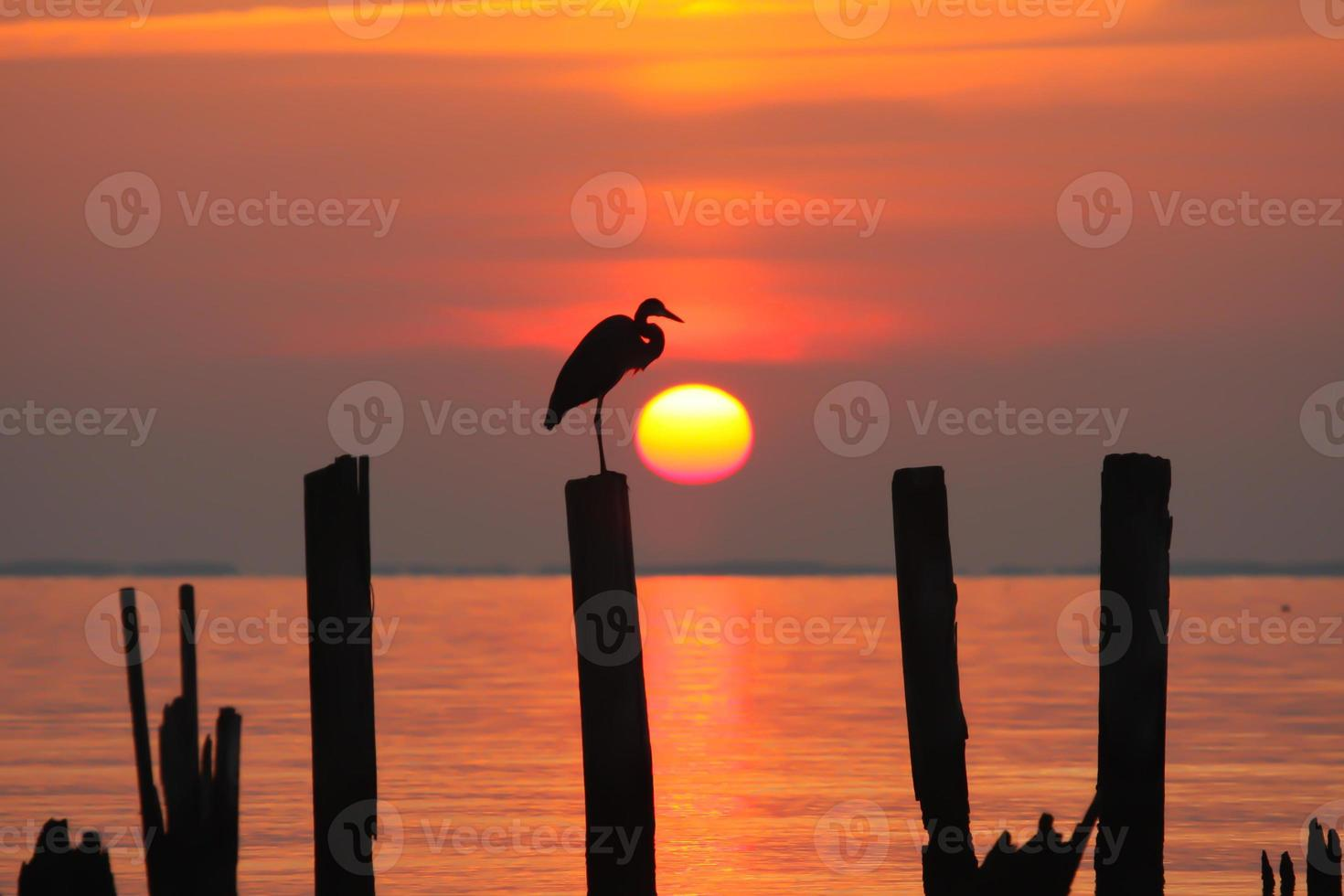 Reiher bei Sonnenaufgang foto